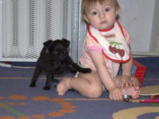 (English) щенок пти брабансона питомник Вита Грифф