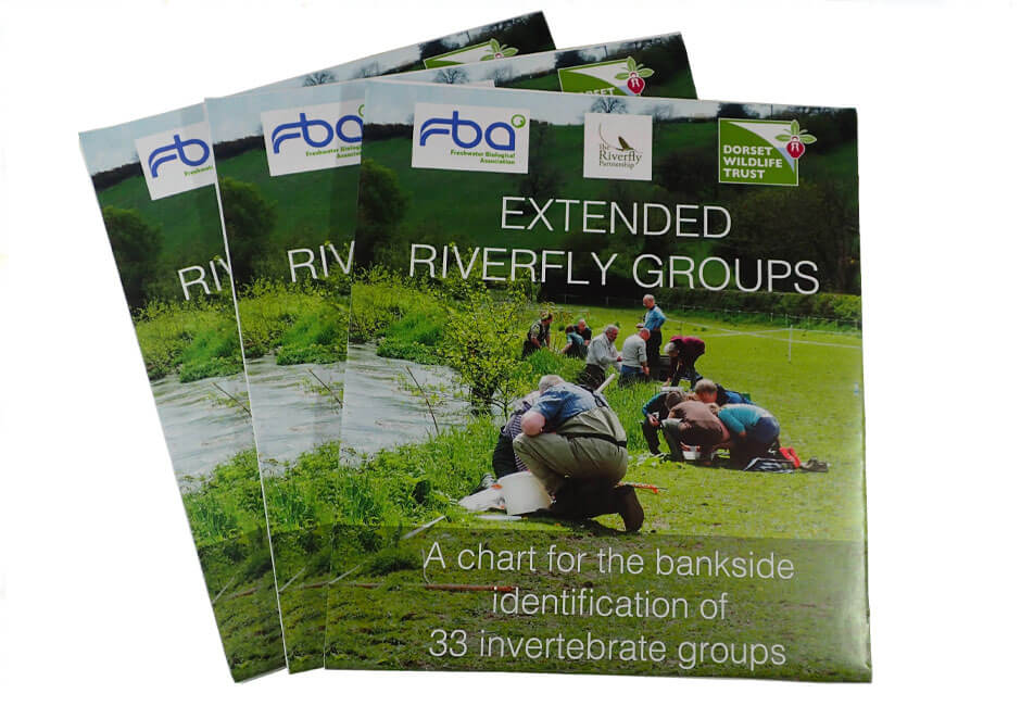 Extended Riverfly Groups