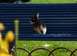 Gypsy Bunny