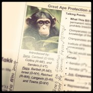 The Great Ape Protection and Cost Savings Act.