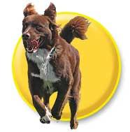 Animals - Running Dog