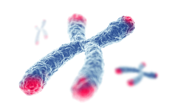 A picture of a Telomere