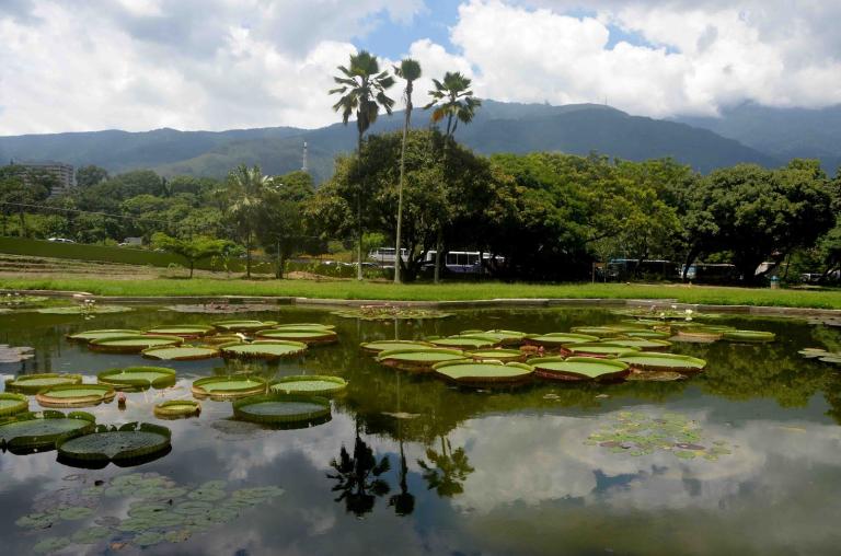 Jardin Botanico Ccs
