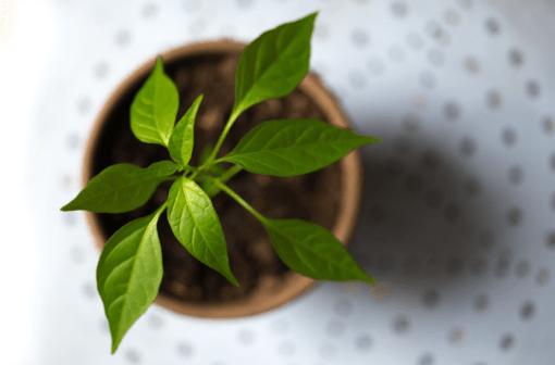 Immunity Boosting Microgreens | Vitality Farms | Lakeland, FL
