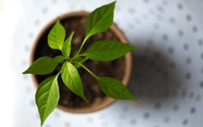 Immunity Boosting Microgreens