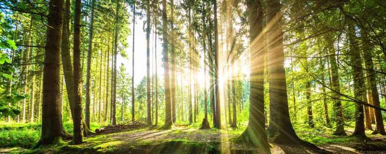 Waldpanorama mit Sonnenstrahlen
