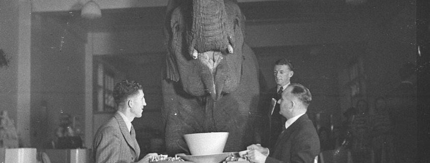 Elephant Tea Party