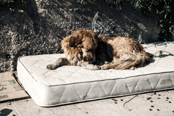 Mattress with dog sleeping on it