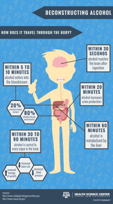 how alcohol travels through the body