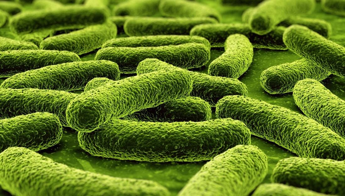tuberculosis-bacteria