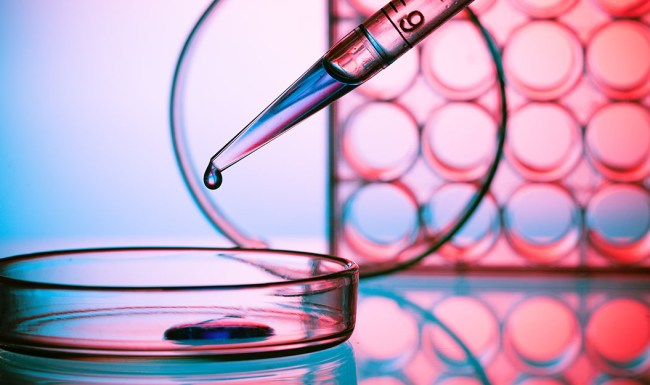 mutations rate, antibiotic resistance