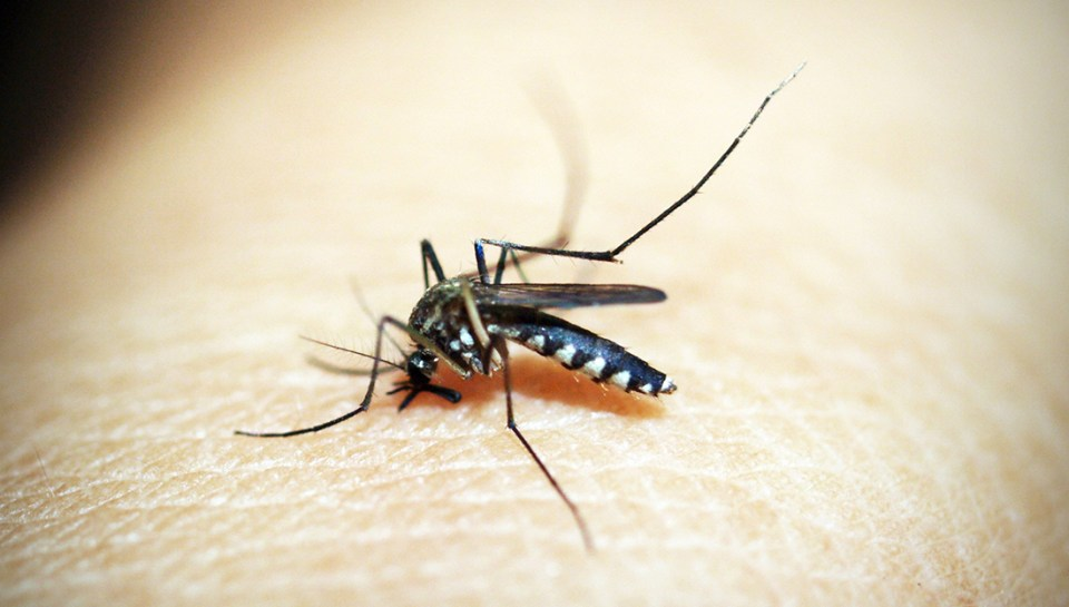 Top 5 injuries and illnesses of the summer-bug bite-an close-up picture of a mosquito on skin