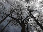 Wildhorn Rock Tulip Tree Under Stormy Skies