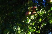 Dappled Apple Bundle