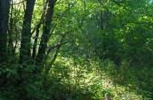 Ray Illuminating the Forest