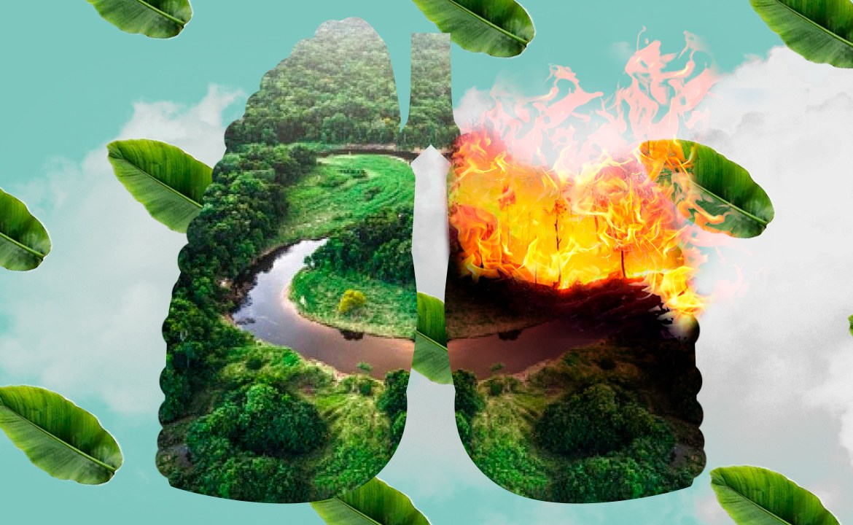 Incendios en el Amazonas: ¿qué podemos hacer?