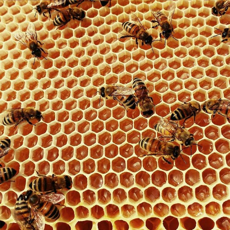 api su favo con miele