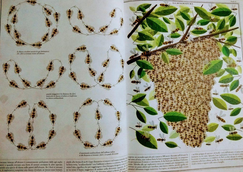 Il regno delle api di Piotr Socha pagina 3