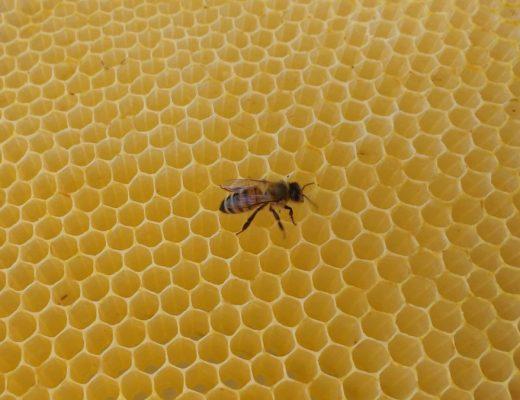 Favo in cera d'api con celle a esagoni