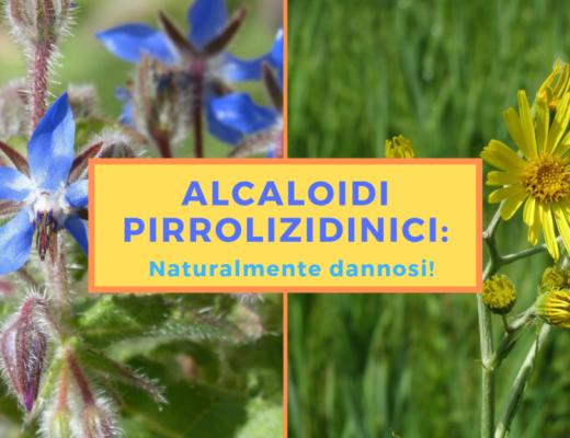 alcaloidi pirrolizidinici