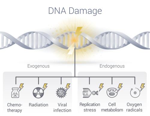 Khasiat Dan Kelebihan Vivix Shaklee Untuk Pesakit Kencing Manis - Kerosakan DNA