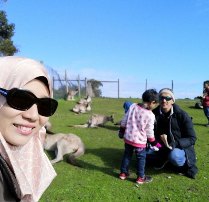 Bermain Dengan Kanggaru Di Wildlife Park Philips Island
