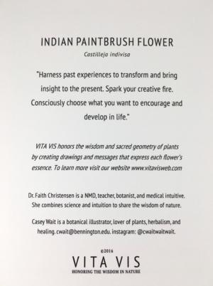 Indian Paintbrush Flower Card Back