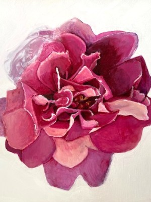 Illlustration of Moss Rose