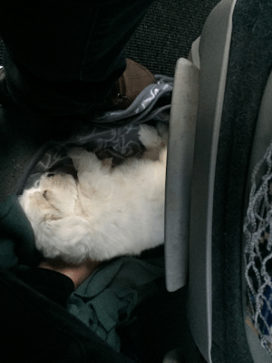 Nina Sleeping on the Floor of the Bus