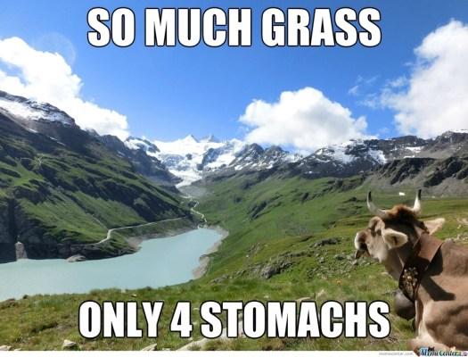 cow-problems_o_2228813