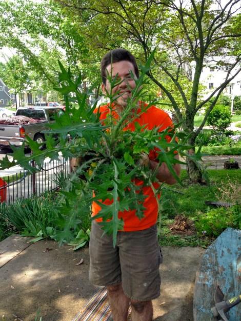 Garden for Blog11