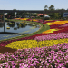 Spring at Disney World. Vivacious Views. Blog