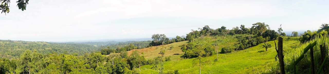 SOUTH LAKE IS A FERTILE LAND AND EXCELLENT FOR GROWING EVERYTHING, SPECIALLY, COCOA