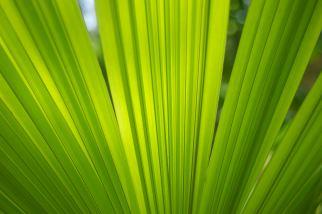 costa-rican-wild-ferns