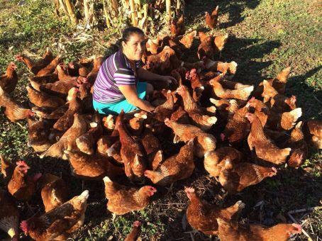 Haciendo Arío Chickens