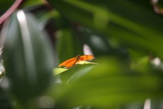 wildlife-in-costa-rica