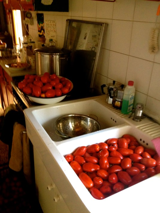 Washing the tomatoes.