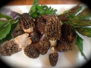 Fresh Morel Mushrooms platter