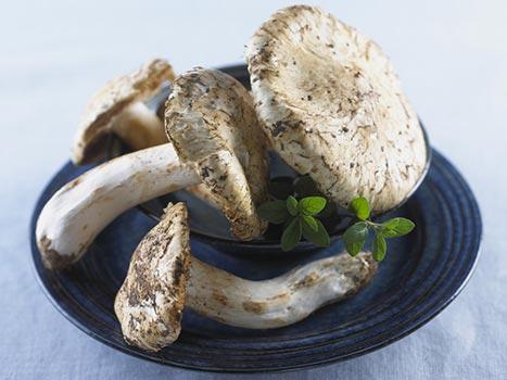matsutake wild mushroom