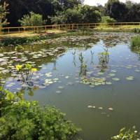 """Empresas utilizam """"Wetlands"""" (Jardins Filtrantes) no tratamento de esgoto"""