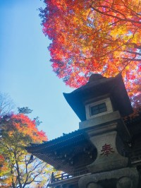 fall leaves in Mount Takao