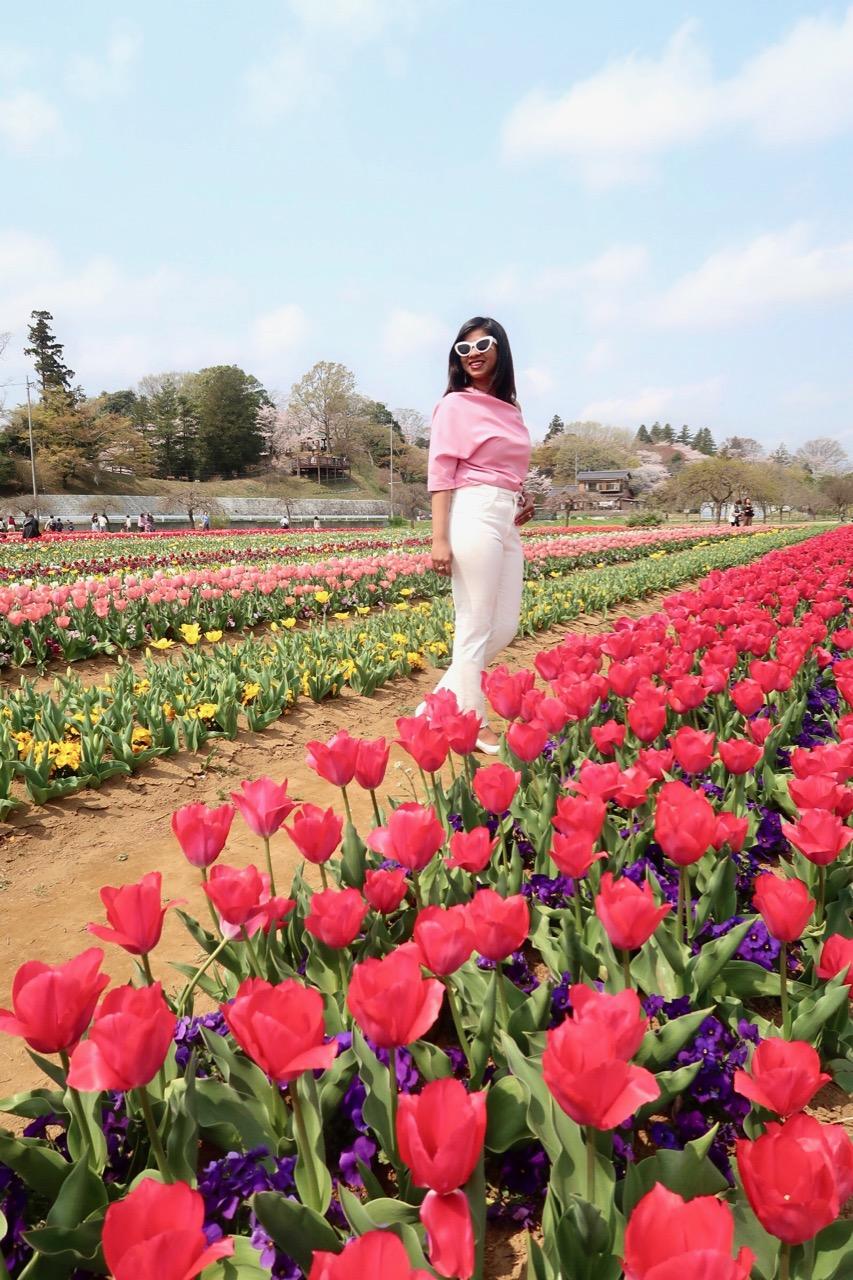 tulip farm in chiba