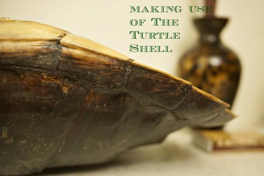 turtleshell2