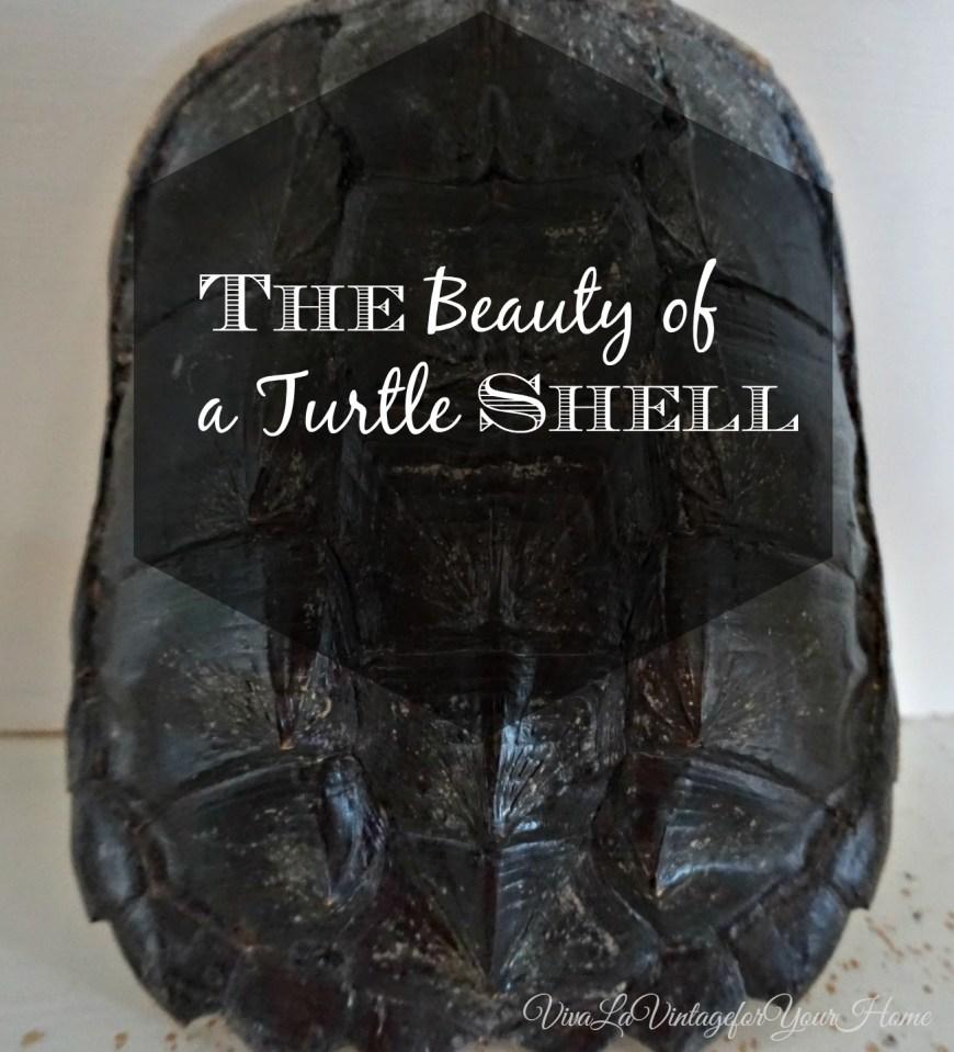 turtleshell9