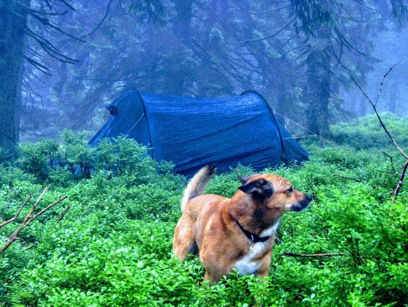 Der beste Wanderfreund des Menschen war geboren.