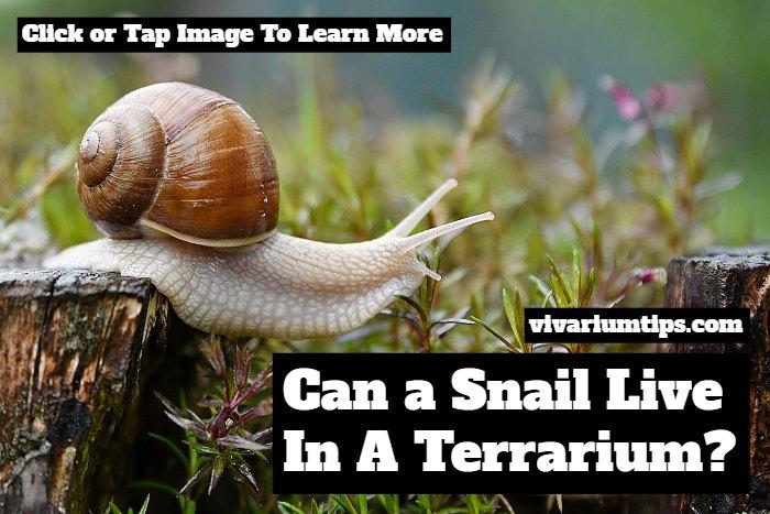 can a snail live in a terrarium