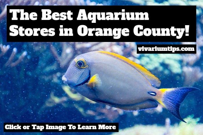 best aquarium stores in orange county