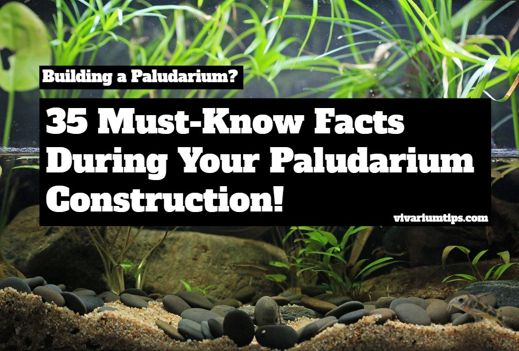 must know facts during your paludarium construction