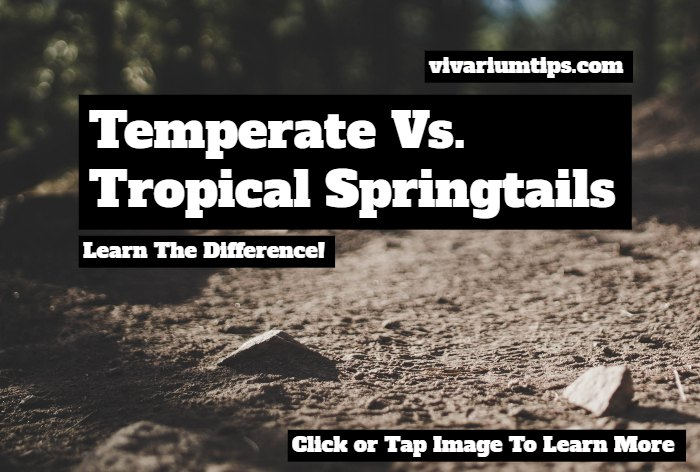 temperate vs tropical springtails