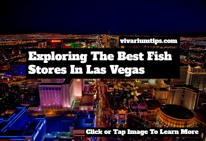 fish store las vegas